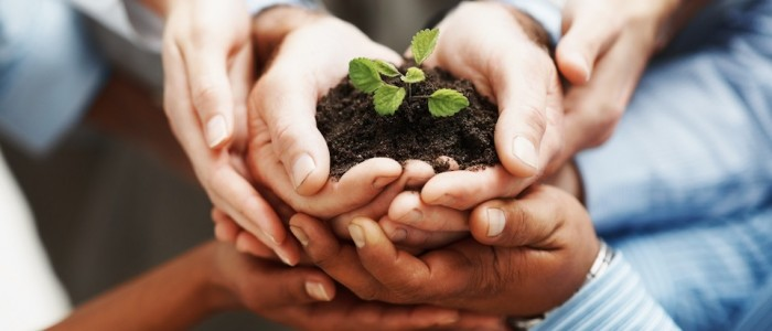 photodune-202925-business-development-hands-holding-seedling-in-a-group-m3
